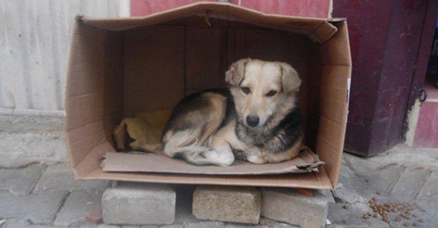 Vatandaşlar Sokak köpeklerine kulübe istiyor