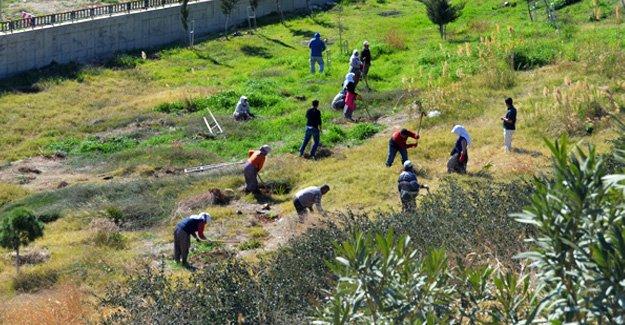 Hastane bahçesi ağaçlandırılıyor