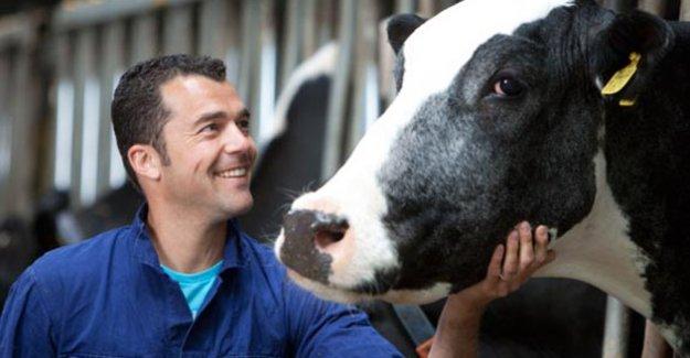 Genç çiftçilere nakit yerine inek hibe edilecek