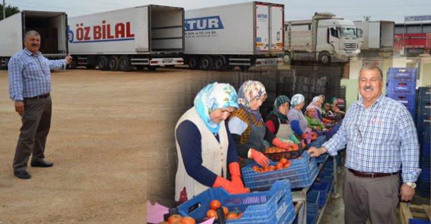 Günlük 250 ton domates ihracatı