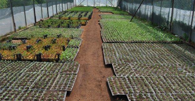 Silifke'de yılda 150 bin çiçek üretiyor