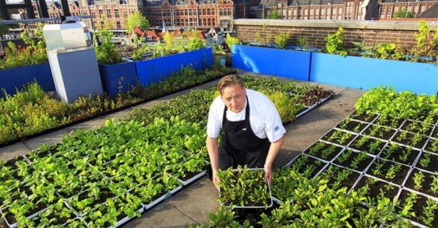 Çatıdan sofraya taze sebze!