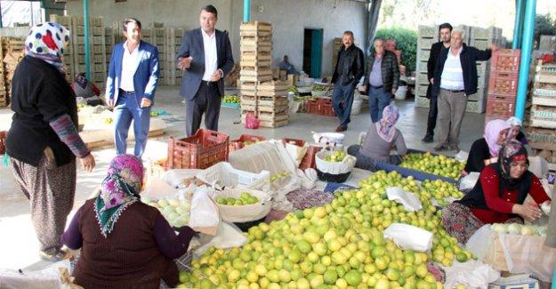 Başkan Turgut, 'BEREKETLİ BİR HASAT SEZONU DİLİYORUM'