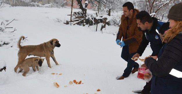 Gülnar Belediyesi Sokak hayvanlarını unutmadı