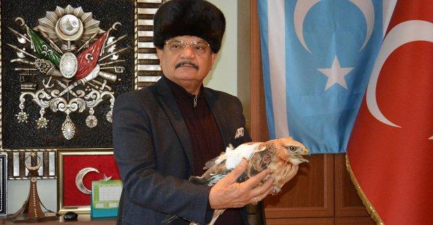 Nesli tükenmekte olan Kızıl Şahin'e Gülnar Belediyesi sahip çıktı