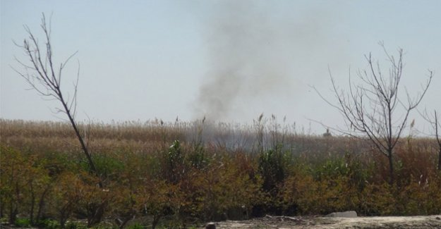 Göksu Deltası'nda çıkan yangın kendiliğinden söndü