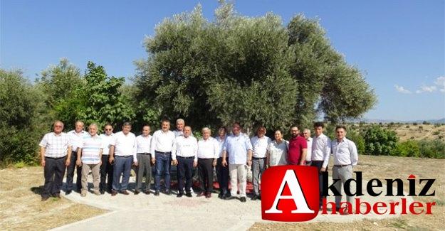 Mut---Ege Zeytin Ve Zeytinyağı İhracatçılar  Birliği, 1310 Yıllık Anıt Ağacı Ziyaret Etti