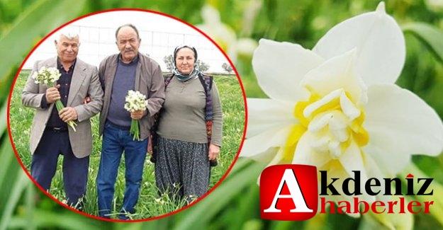 Silifke'de Aralık Ayında Nergisler Çiçek Açtı