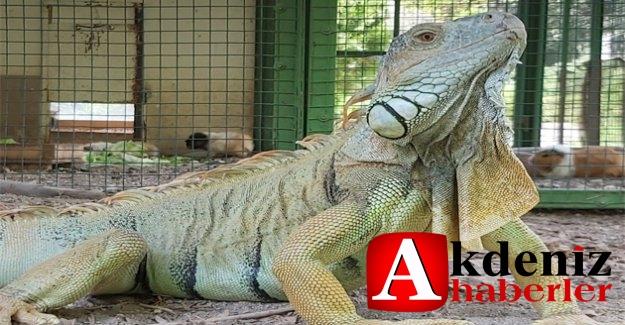 Tarsus Doğa Parkı, İzmir'den Gelen 57 Yaban Hayvanının Yeni Yuvası Oldu