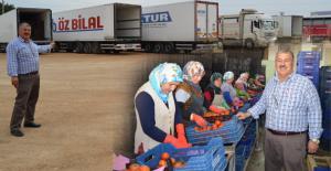 Günlük 250 ton domates...
