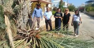 Palmiye ağaçlarınızı ilaçlatın