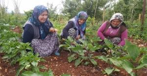 Silifkeli kadınlar, Stresi bahçede atıyorlar