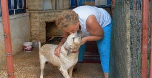 Hayvan Sevgisine Adanmış İki Ömür