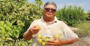 Hediye Fidanla Başladığı Guava Üretimini 1500 Ağaçla Sürdürüyor