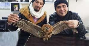 Soğukta kalan baykuşa vatandaş sahip çıktı