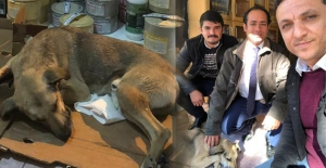 Vatandaş- belediye işbirliğince sokak köpeğine sahip çıkıldı