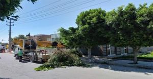 Elektrik Kesintisi Yaşanmaması İçin Ağaçlar Budanıyor