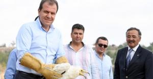 Başkan Seçer, Nesli Tükenmekte Olan Mısır Akbabası'nı Doğaya Saldı