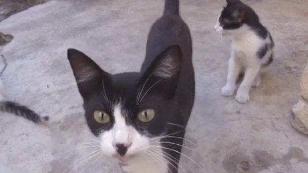 Sevimli Kedi Ailesi